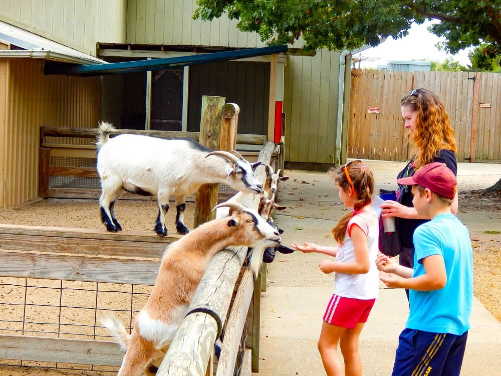 Gulf Breeze Zoo kids petting goats
