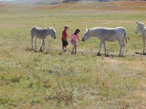 children feeding wild burros at Custer State Park