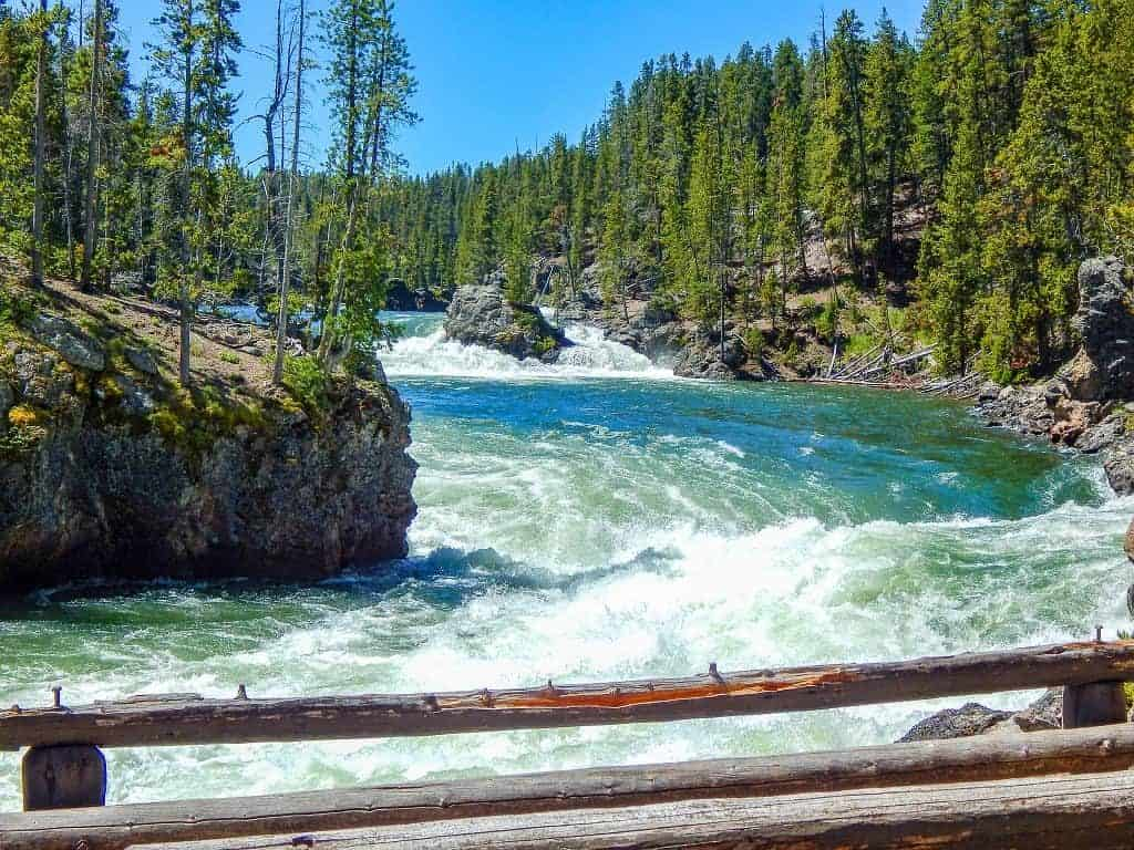 yellowstone river through pine forest
