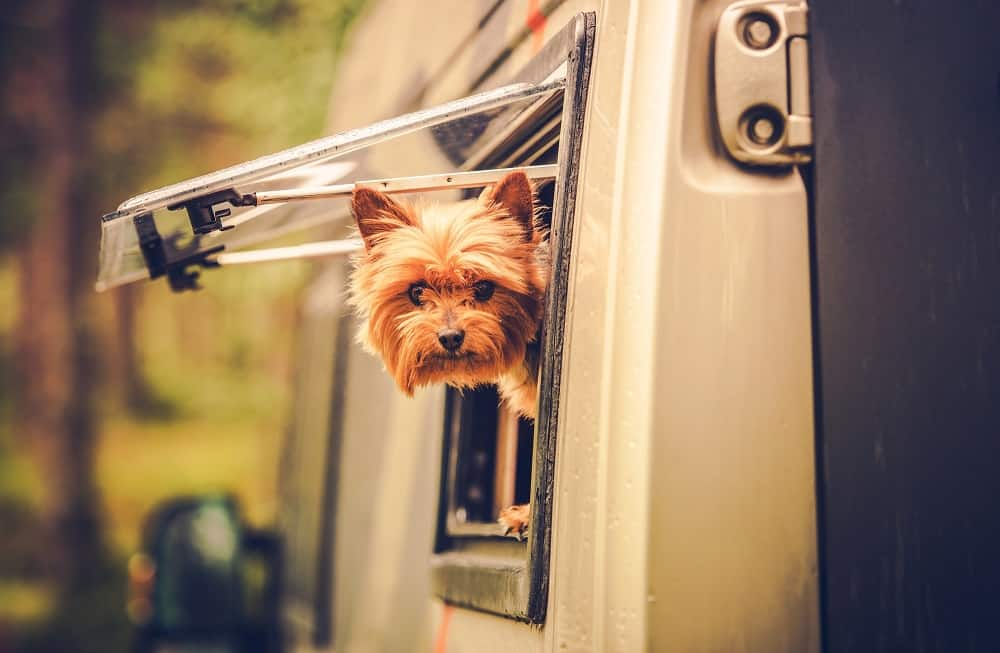 RVing with dogs yorkie with his head out the window of an RV