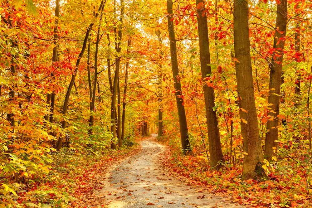 autumn trail in the smoky mountains