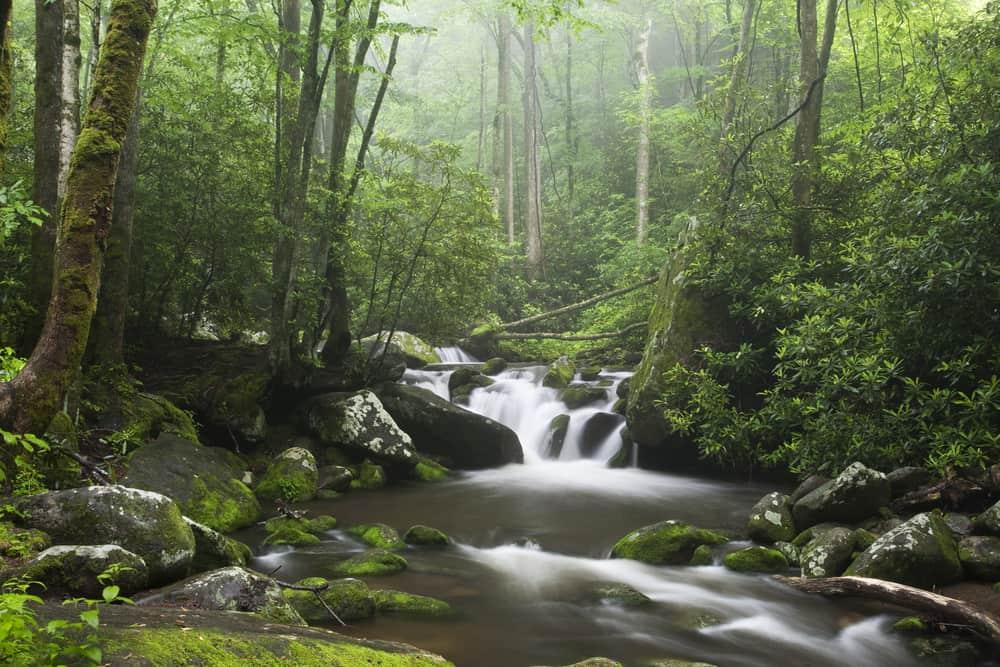 A stream running through the woods